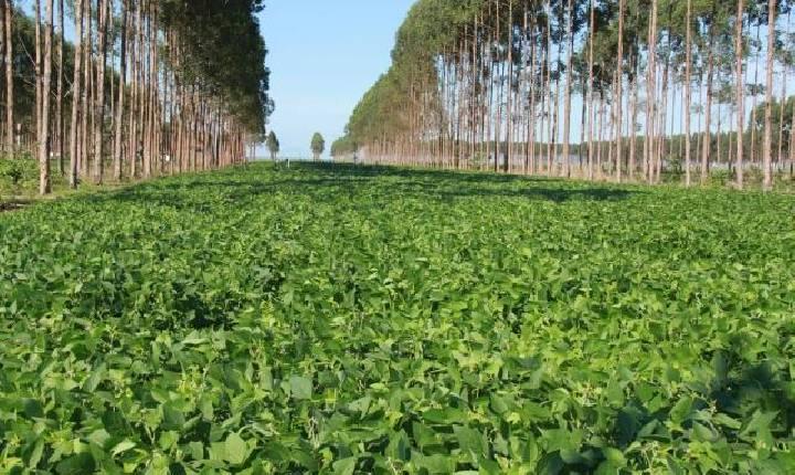 Decreto que institui a Cédula Verde é assinado; SC aumenta produtividade de milho