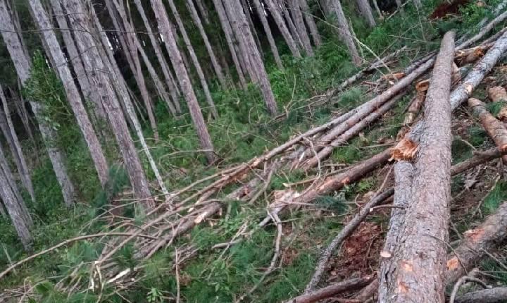 Homem de 38 anos morre após ser atingido por árvore no interior de Concórdia