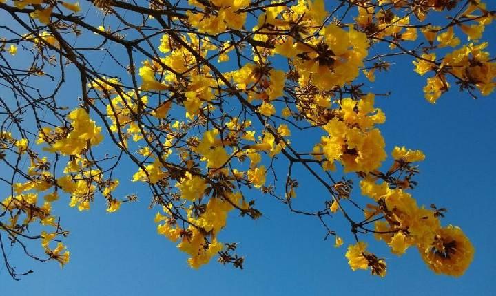 Primavera será mais seca e quente no Oeste de Santa Catarina